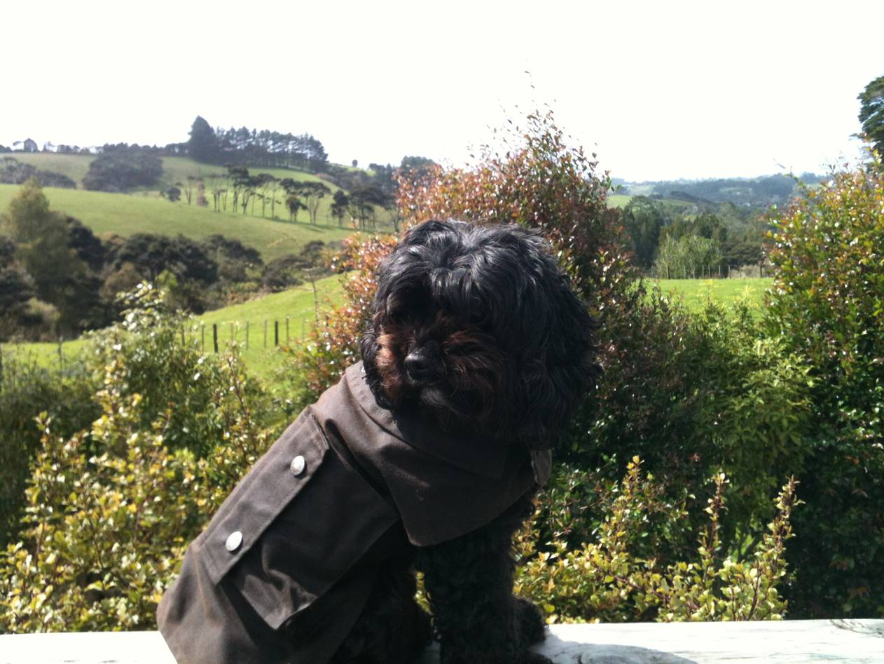 Jazzy in Driza-bone dog coat